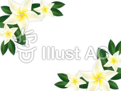 南国の花プルメリアのイラストフレーム 無料イラスト素材 Mdesign211